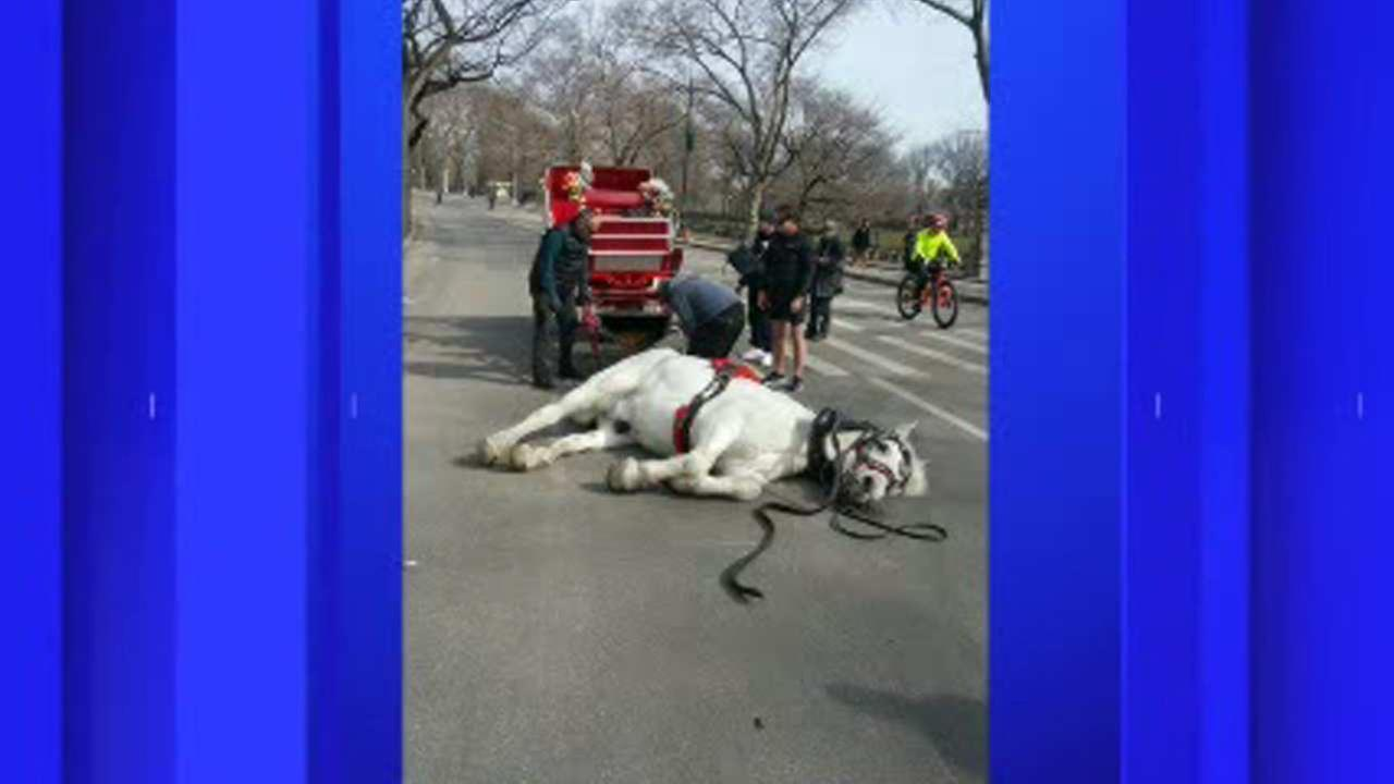 Debate after carriage horse falls in Central Park