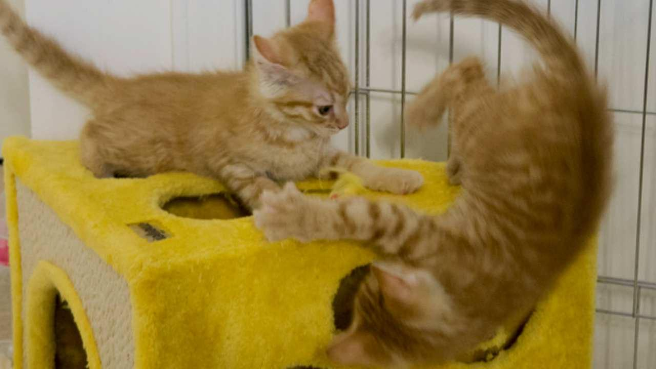 Permalink to 30  Beautiful Live Kitten Cam