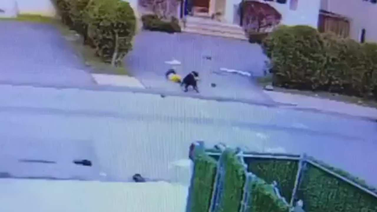 Video captures toddler being attacked by pit bull in New York