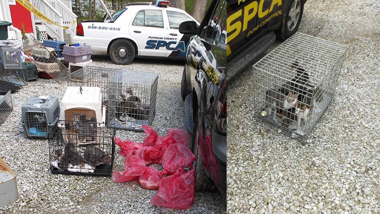 More than 60 cats were seized from a house in Putnam County.