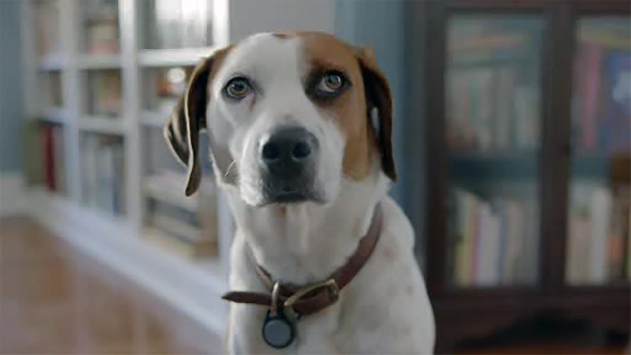 Star of 'Downward Dog,' surprise summer hit, nearly quit acting