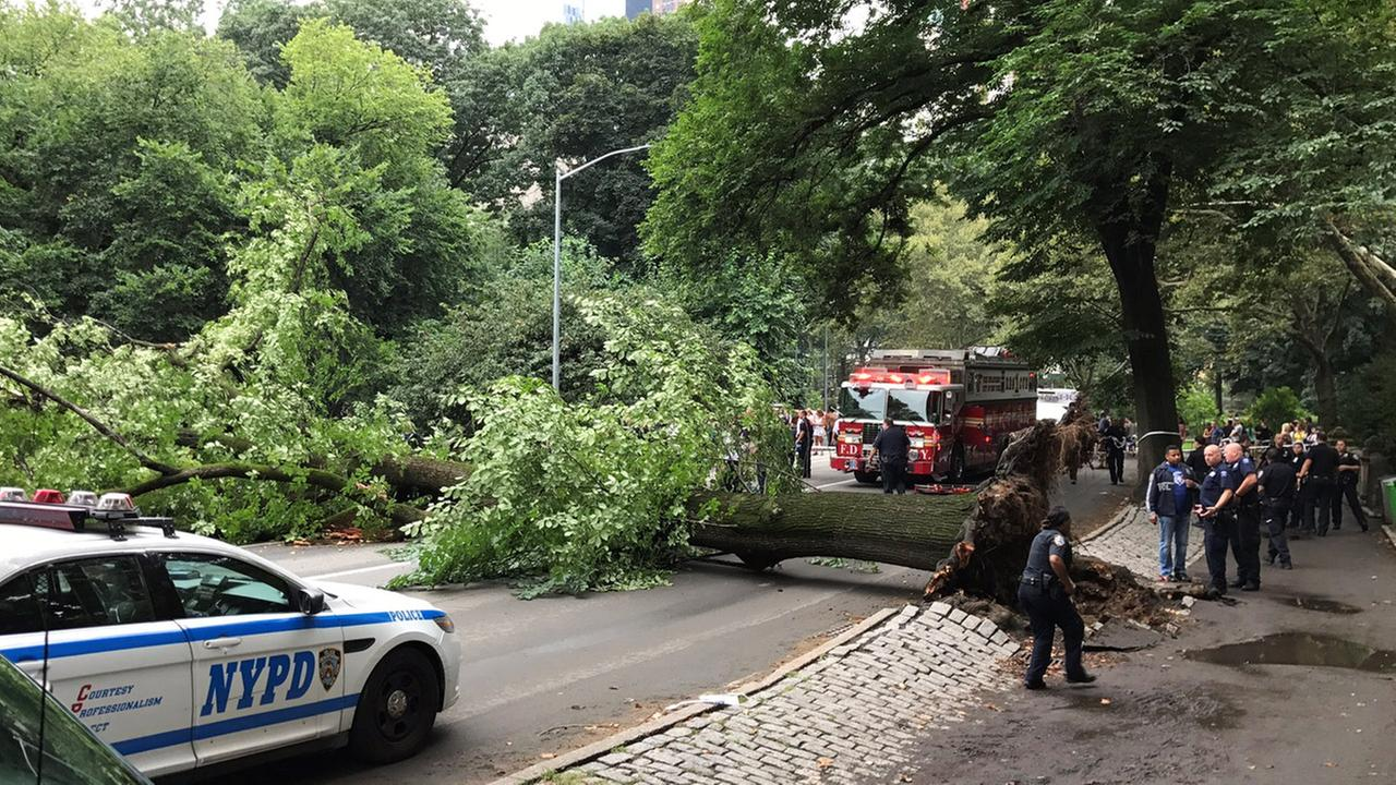Root rot caused tree to fall on mom, kids in Central Park, conservancy says