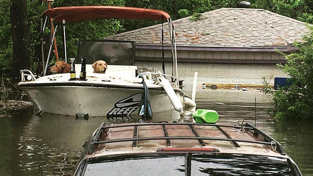 Reporter photographs dogs left behind during Hurricane Harvey