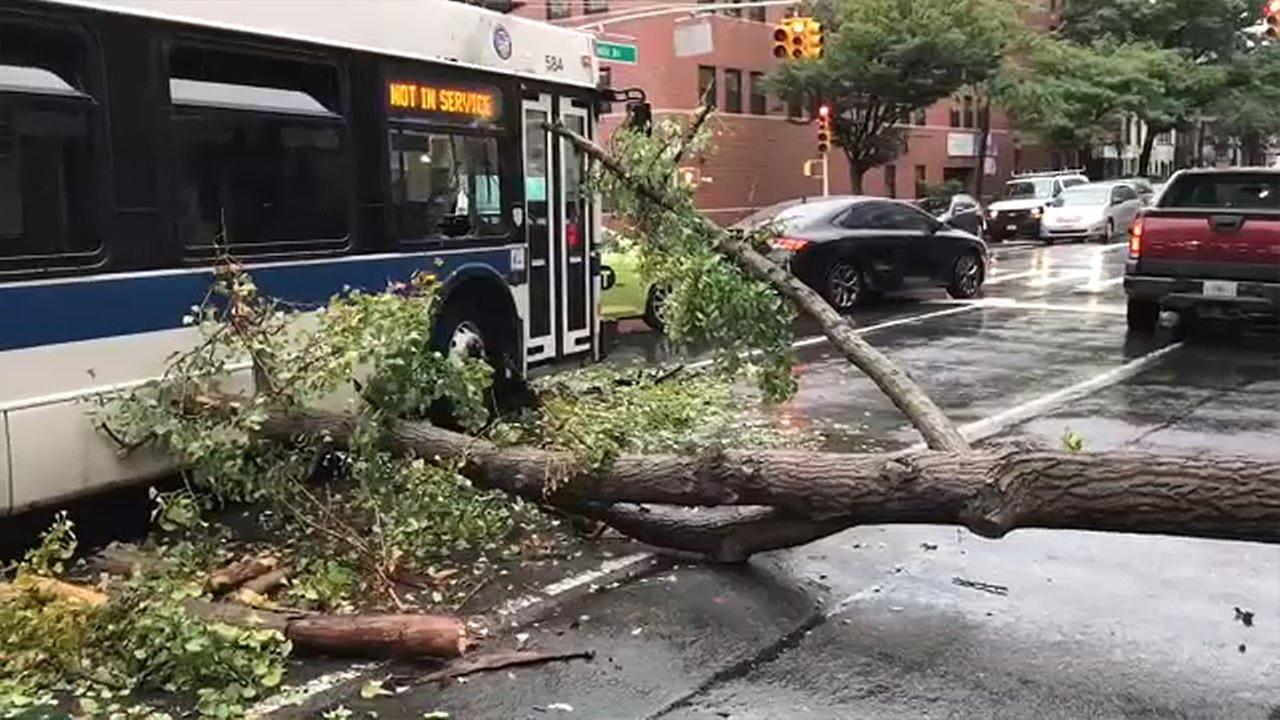 Tree falls on MTA bus in Boerum Hill, Brooklyn
