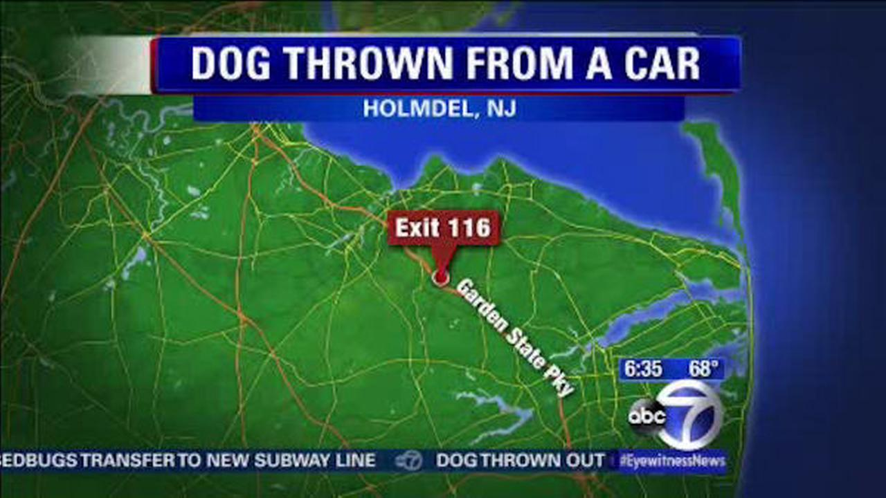 Dog thrown out of moving car on Garden State Parkway in New Jersey