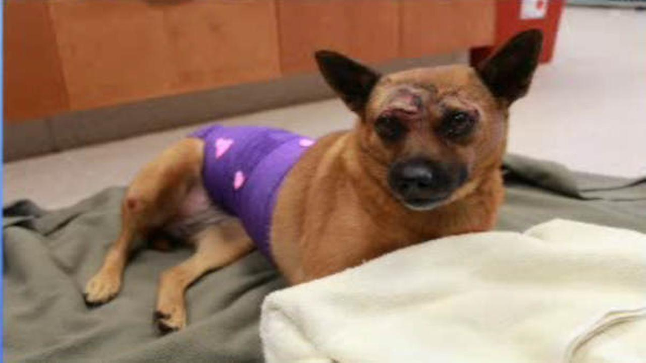 Dog Thrown From Car On Garden State Parkway Leaves Hospital With Owners