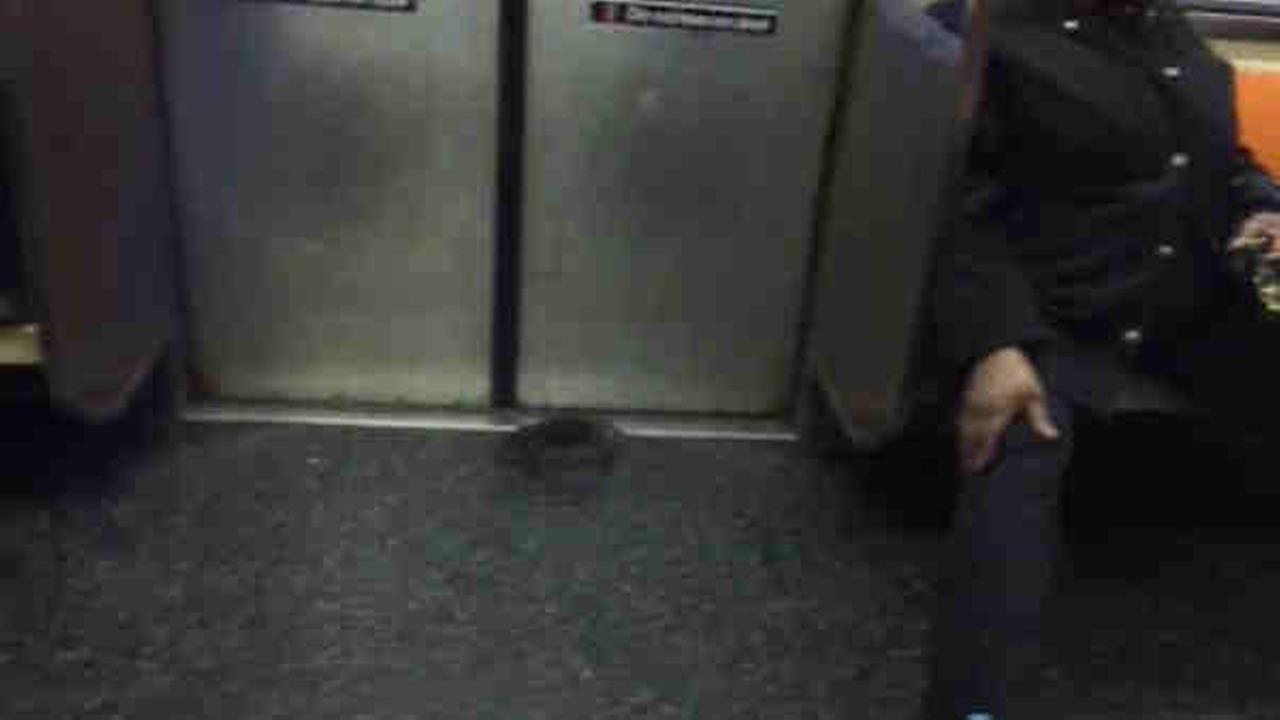 rat on subway
