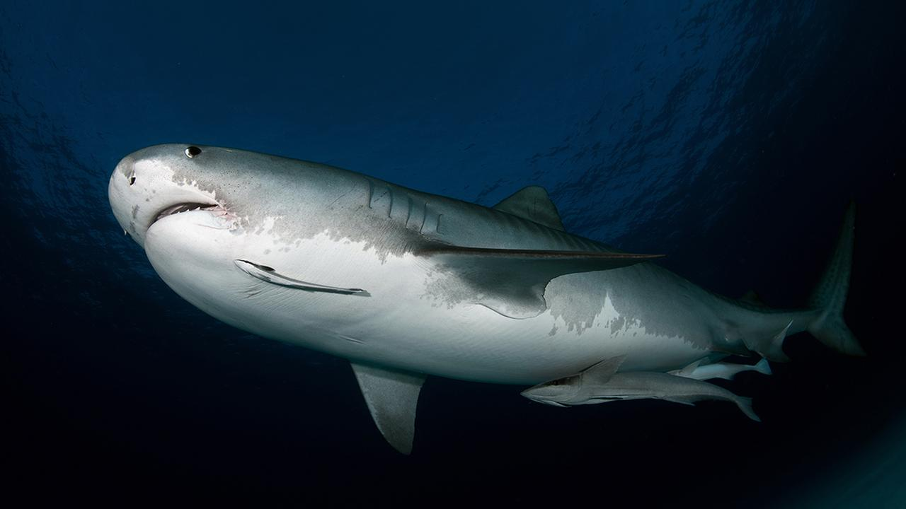 American from city killed by shark in Costa Rica
