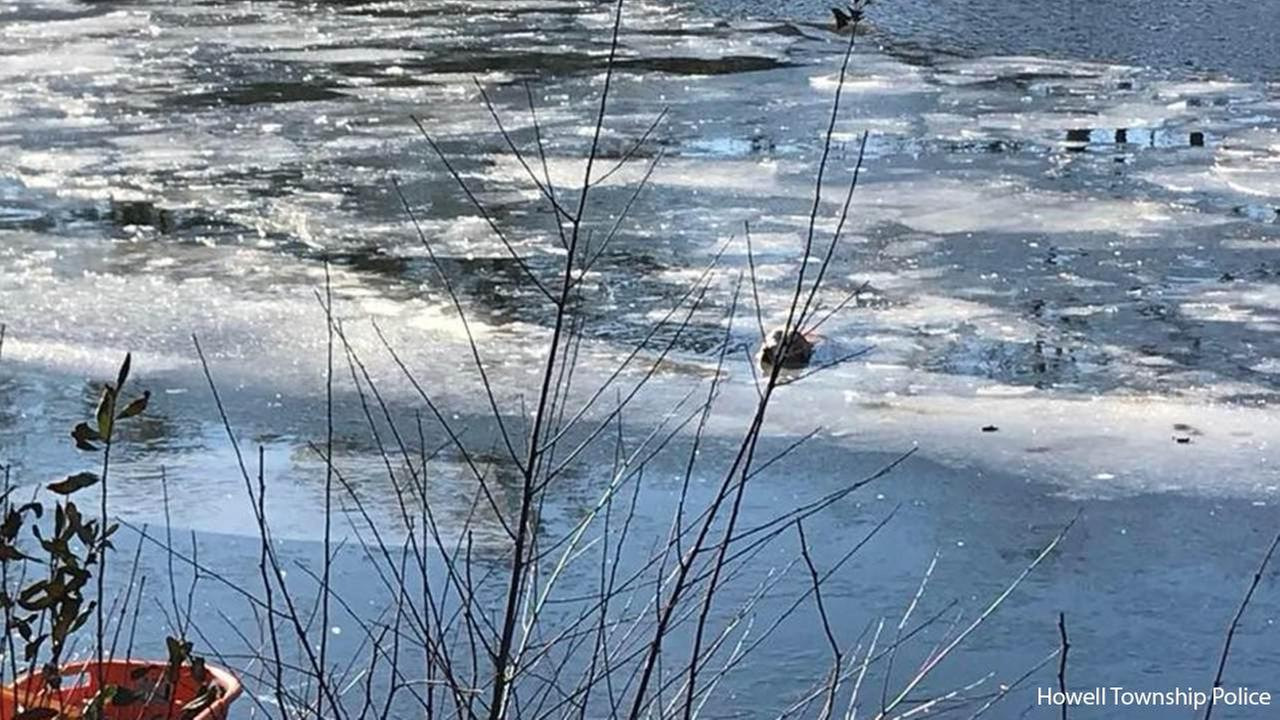 Dog rescued from icy pond in Howell Township