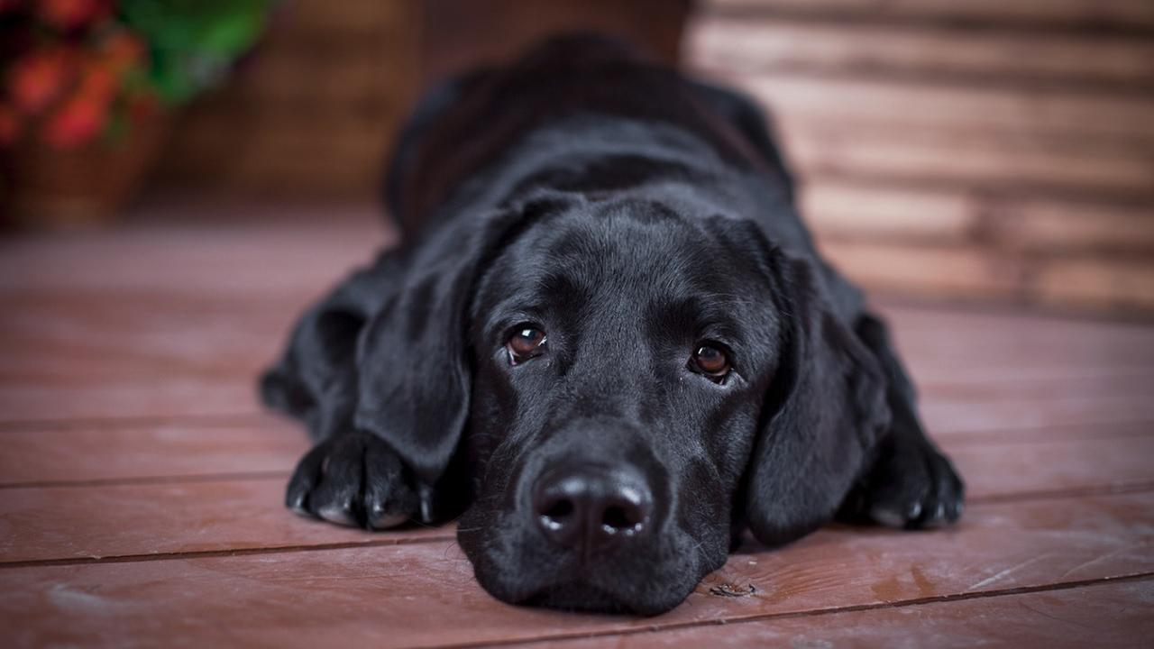 Argument over dog's real owner leads to court custody battle
