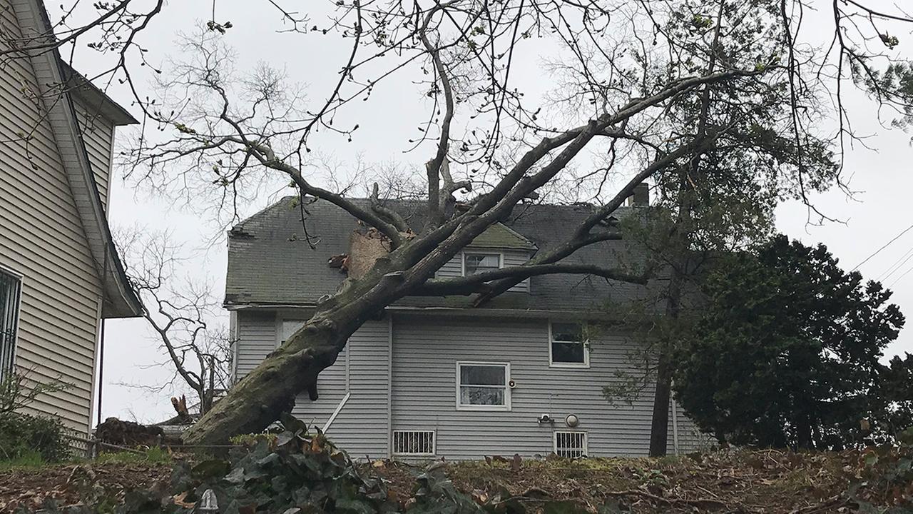 mount vernon tree falls on house