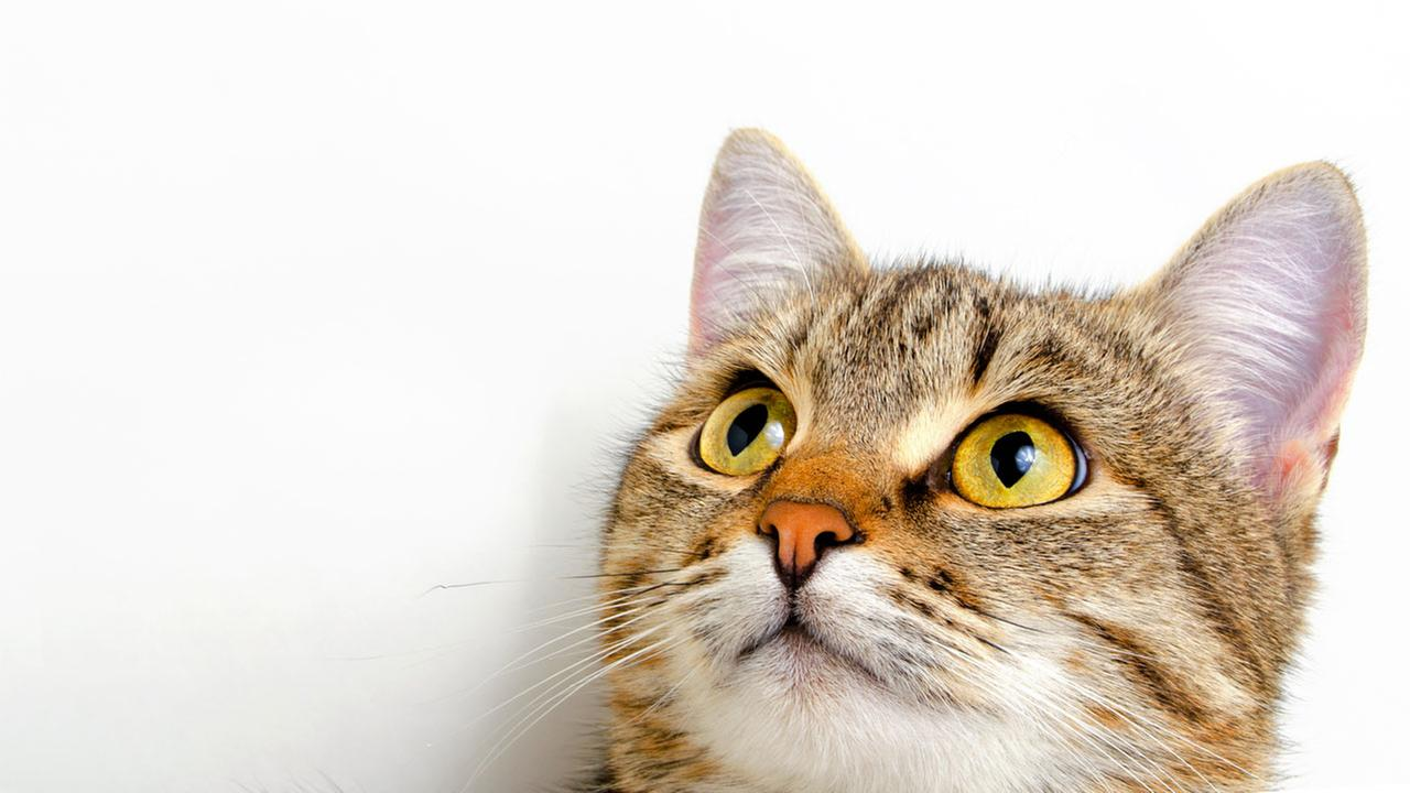 This is a random stock image cat, not Pepper.