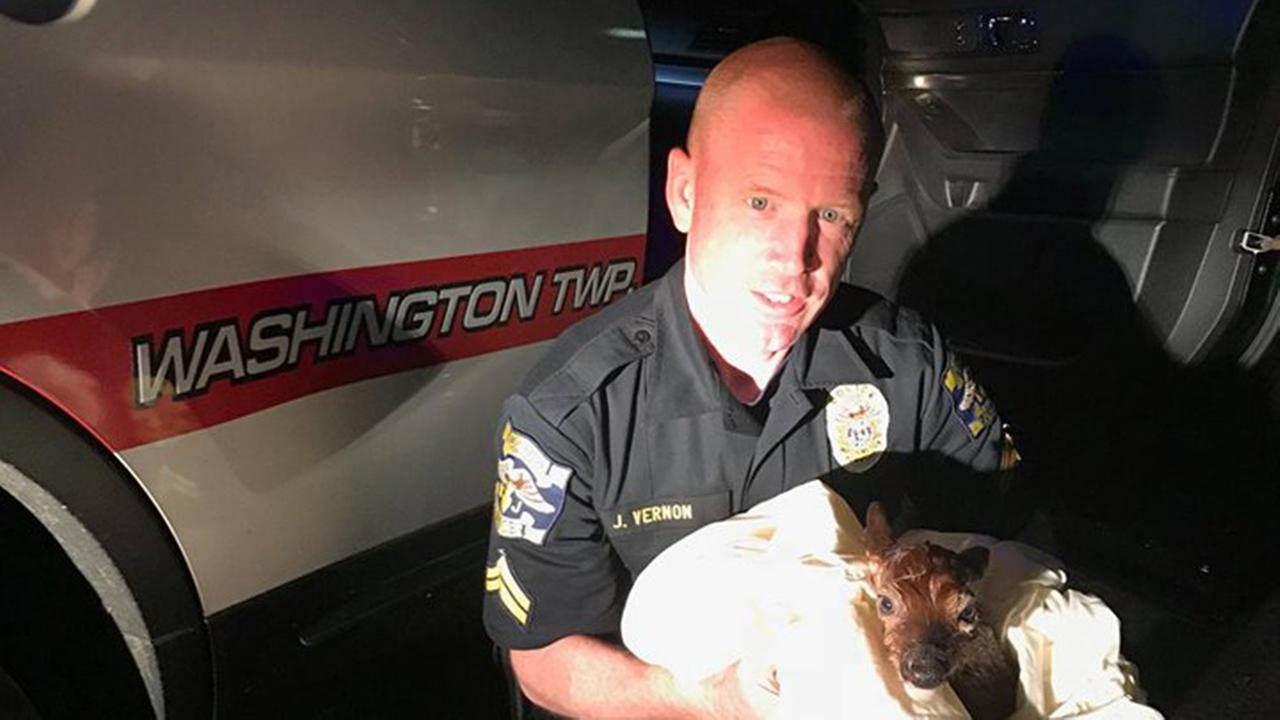 New Jersey officer delivers baby deer after mom killed by car