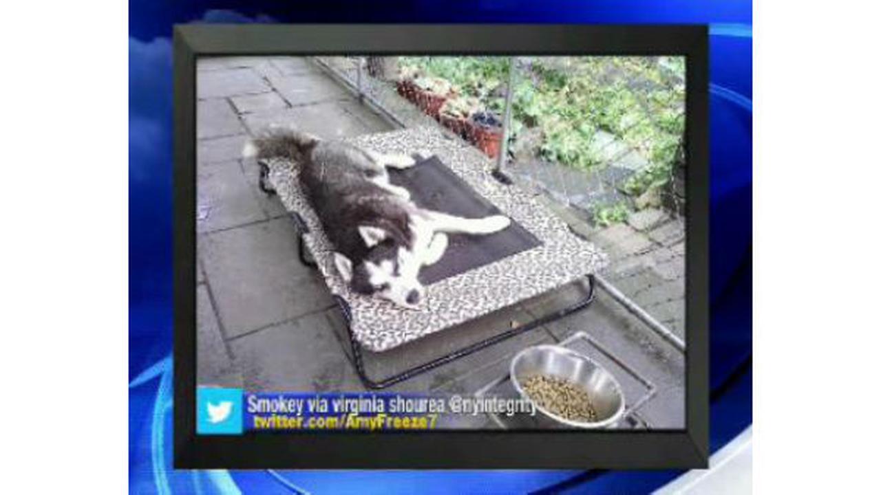 PHOTOS: Super Cat Saturday and Big Dog Sundaywabc