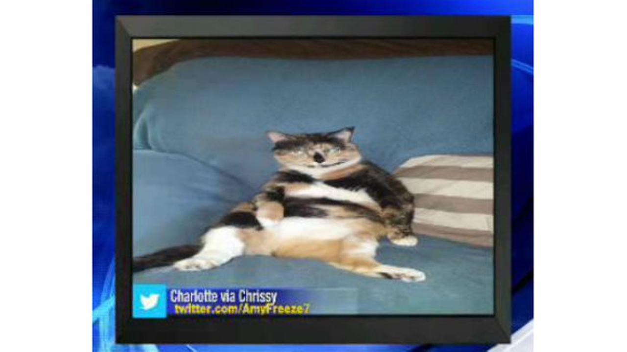 PHOTOS: Super Cat Saturday and Big Dog SundayUngano, Brittany E.