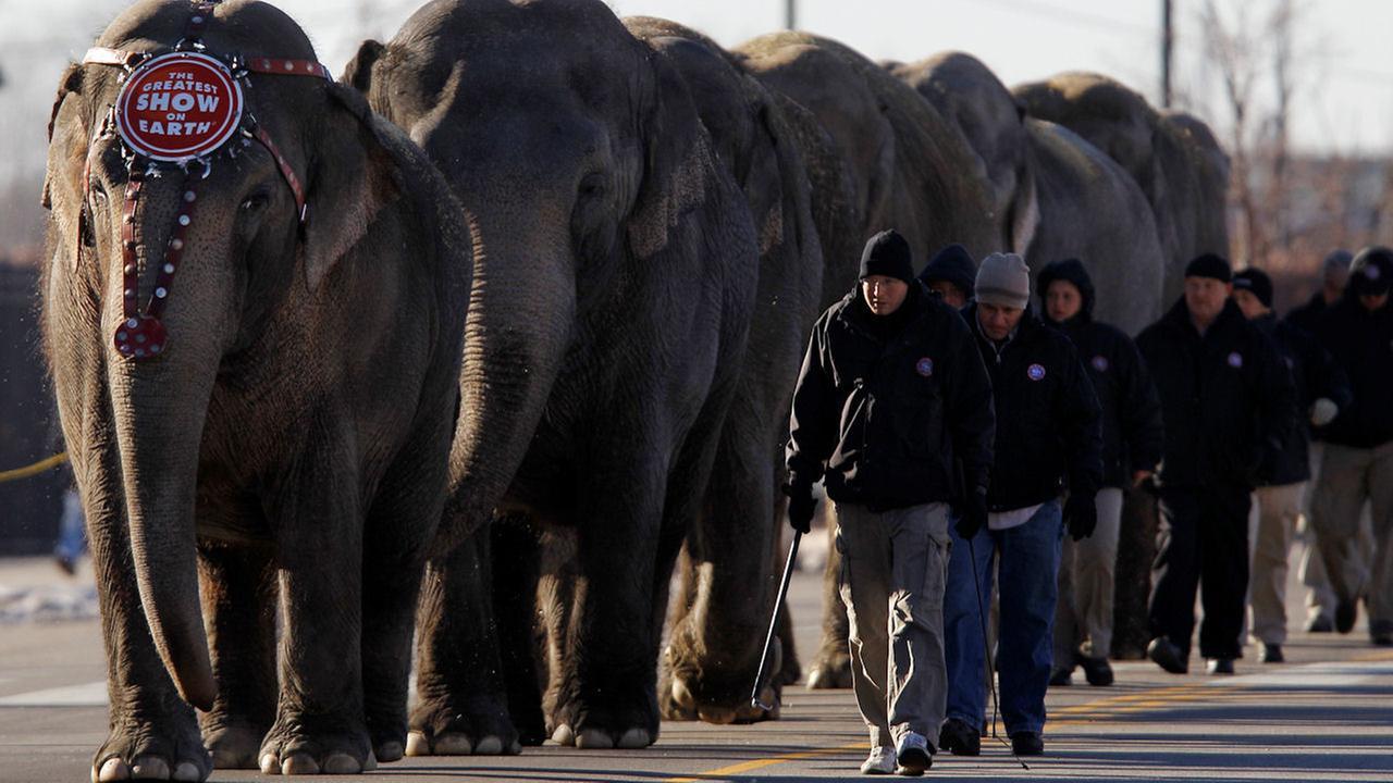 ringling circus elephants