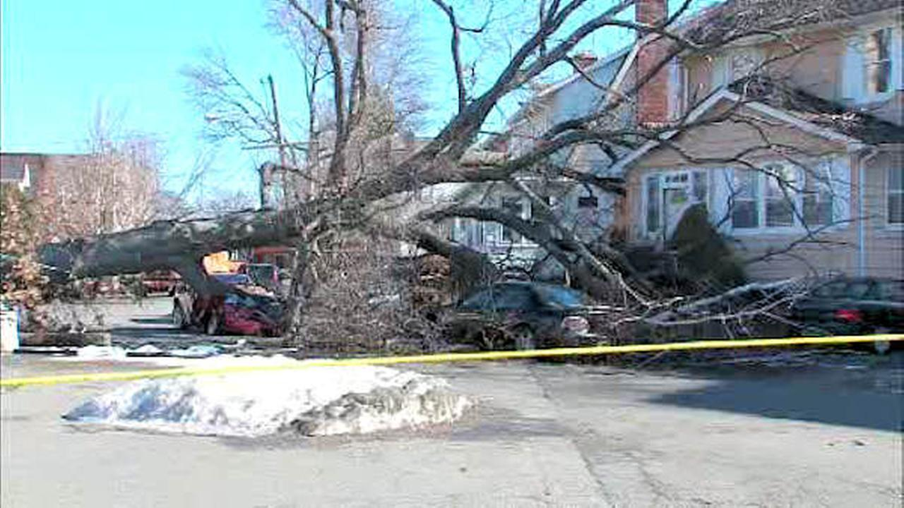 maplewood tree on car