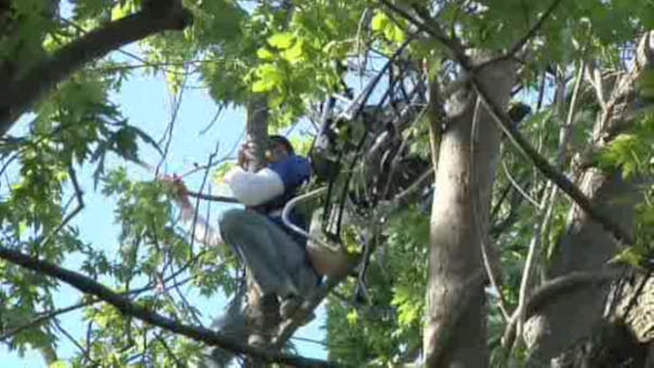 Man rescued from hang glider stuck in tree 7online com
