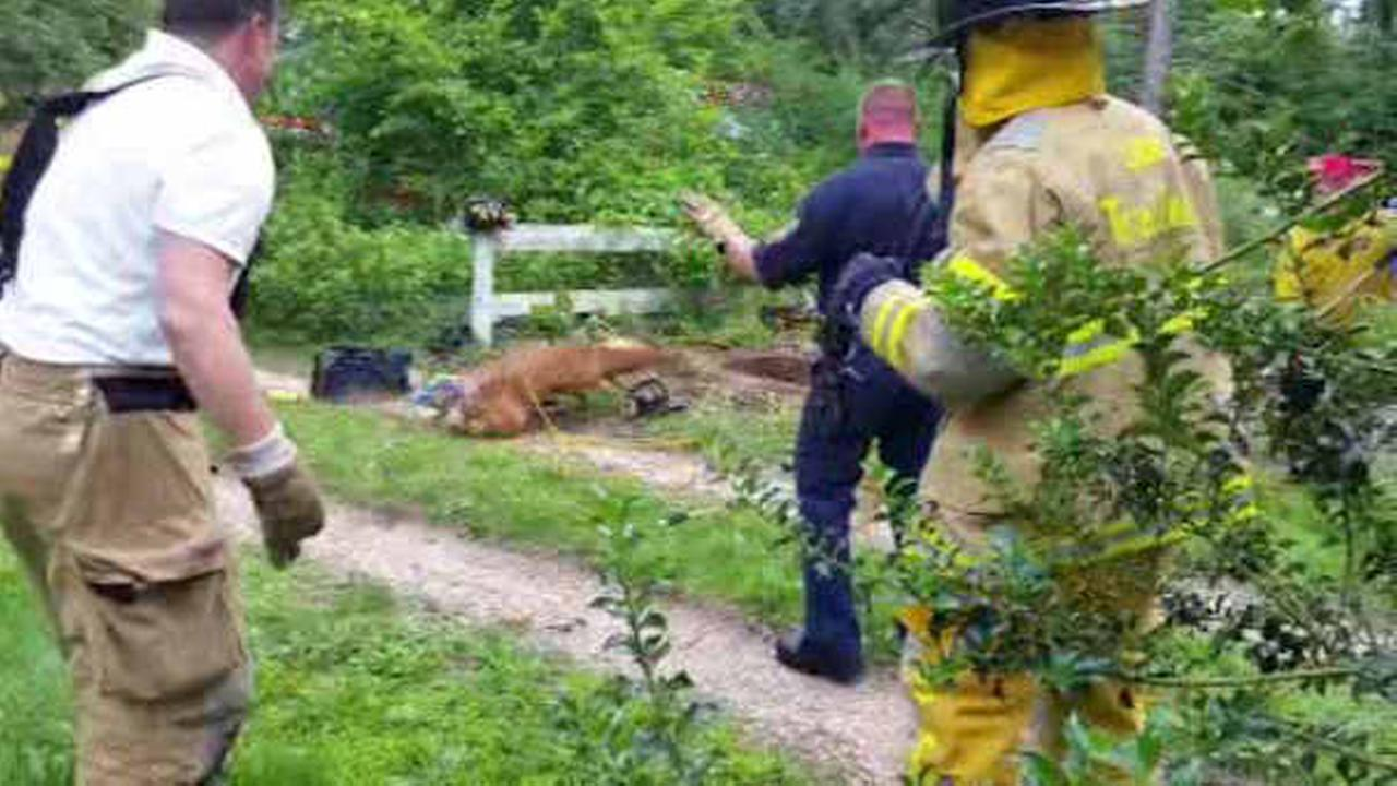 Rescuers in New Jersey save deer that fell into well
