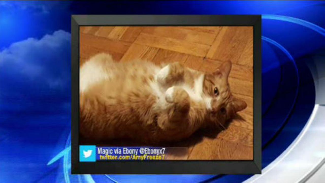 PHOTOS: Super Cat Saturday and Big Dog Sunday WABC