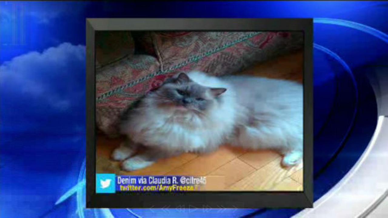 PHOTOS: Super Cat Saturday and Big Dog SundayButler, Ann H.
