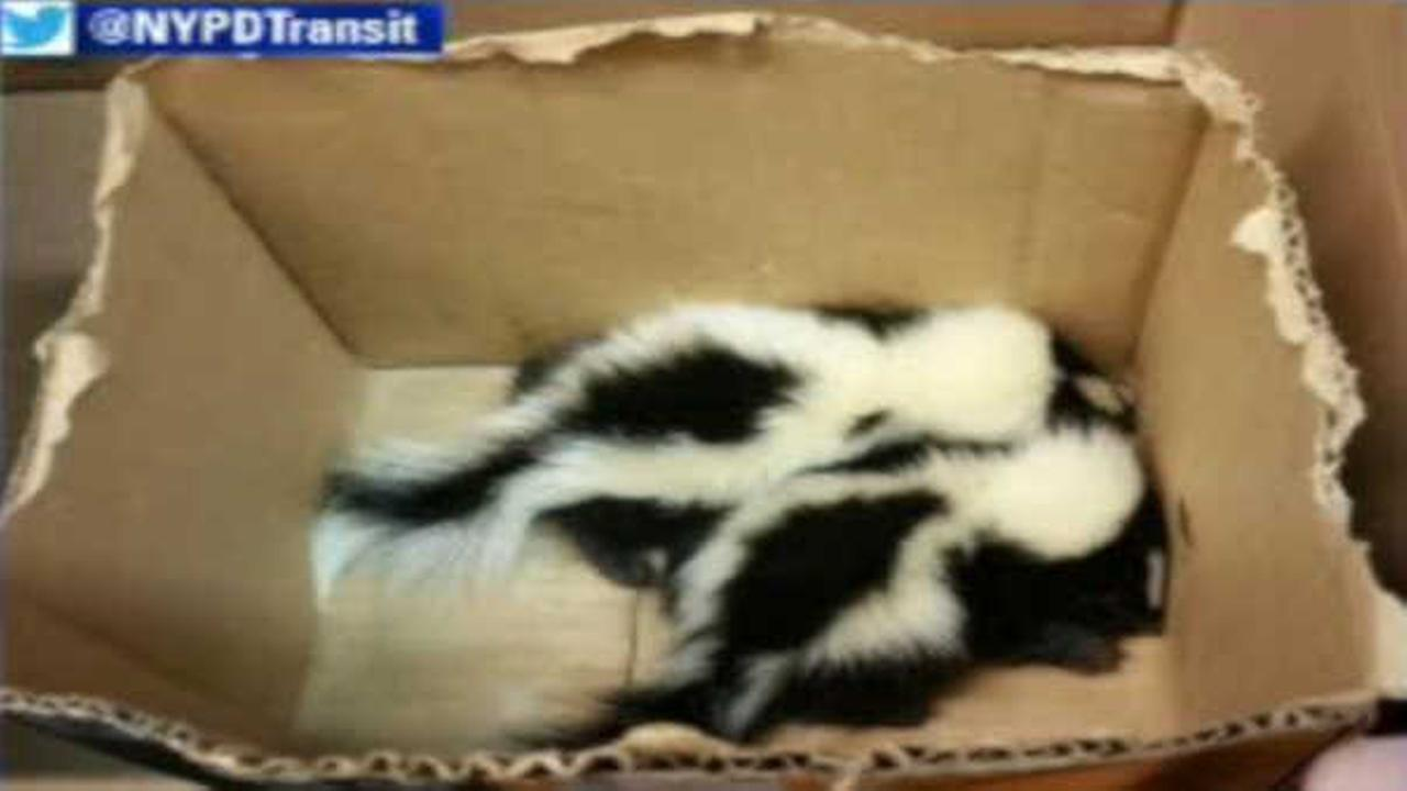 Officers rescue 2 baby skunks at Bronx subway station