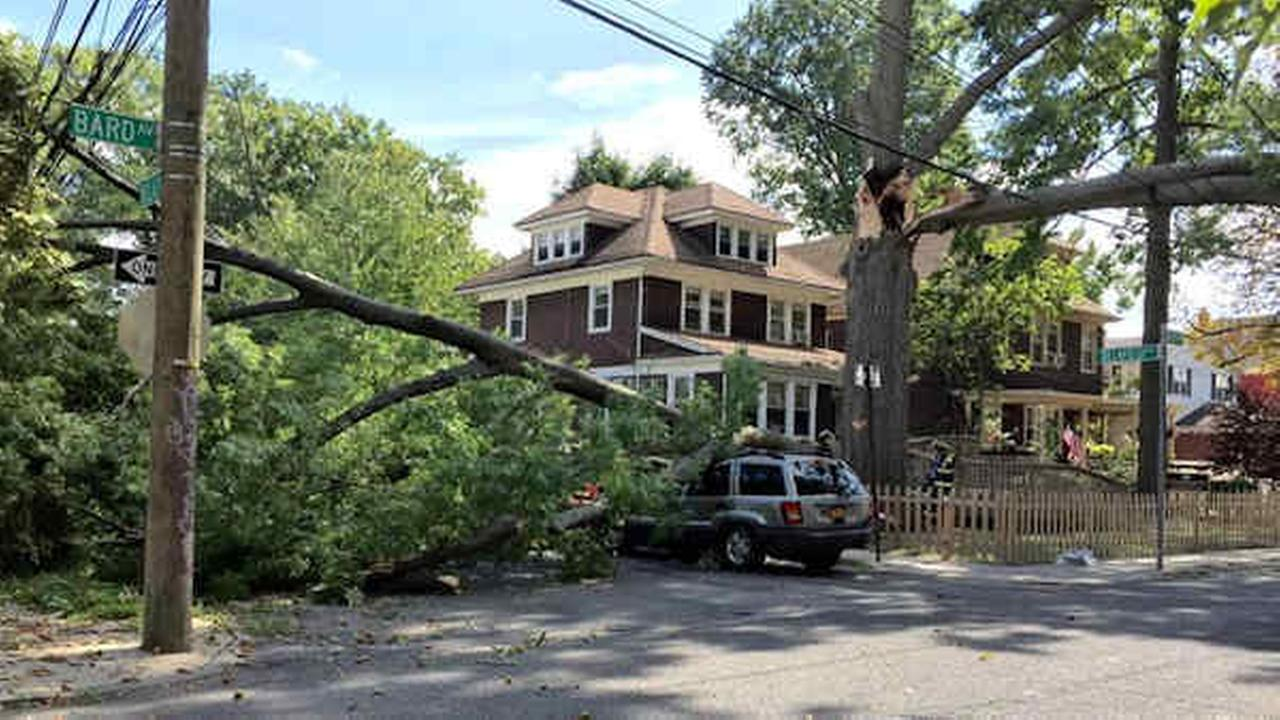 Cars, utility poles damaged after large tree falls in Staten Island neighborhood