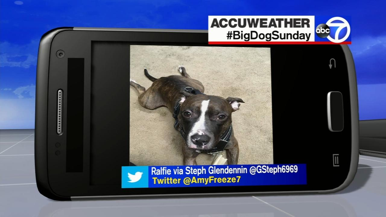 Send us your photos using Twitter and Instagram with the hashtags #SuperCatSaturday or #BigDogSunday, or send photos to Amy via Twitter @AmyFreeze7