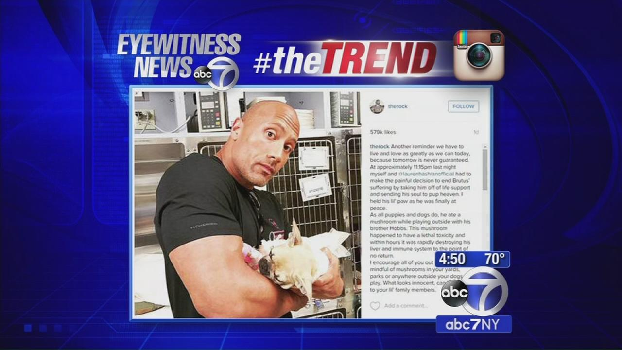 The Trend: The Rocks dog dies after eating mushrooms