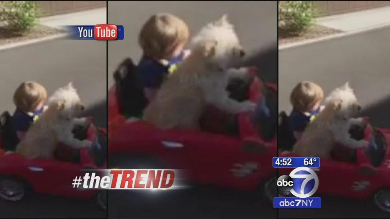The Trend: Dog takes toddler for a drive