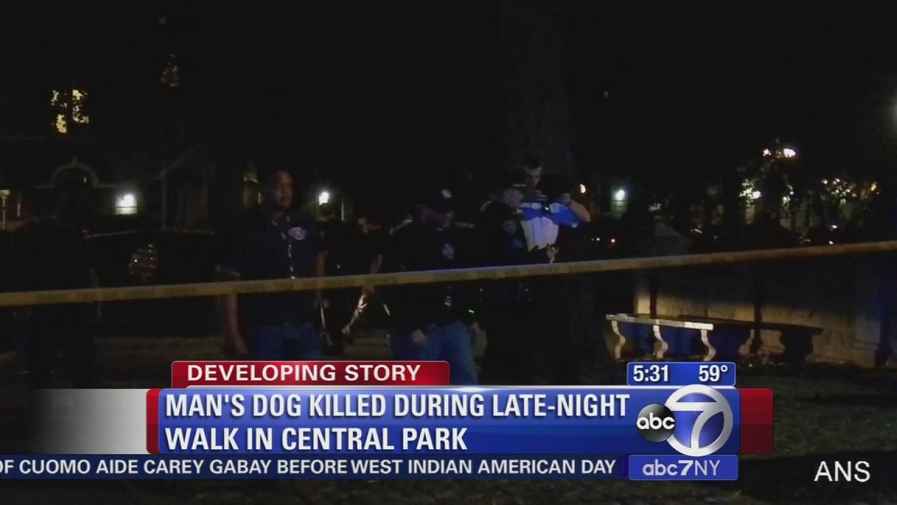 Dog dies mysteriously during Central Park walk