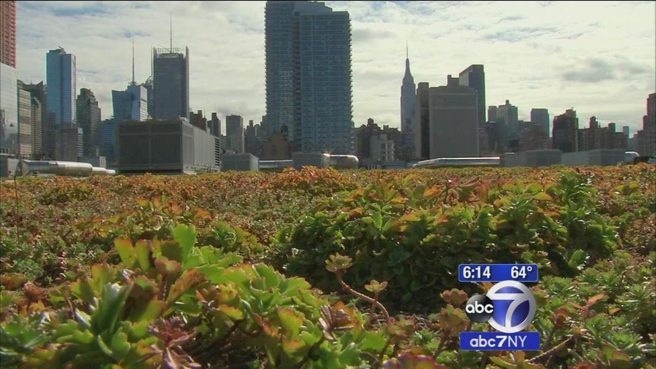 Green roof atop the Javits Center becomes urban sanctuary