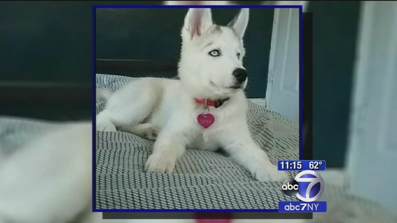 Bronx burglars steal familys puppy