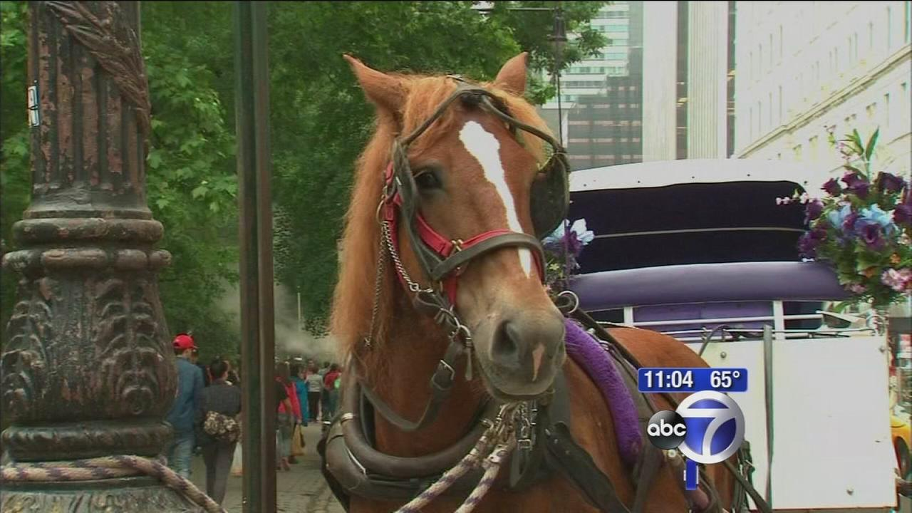 Horse collides with cab after running loose through Central Park