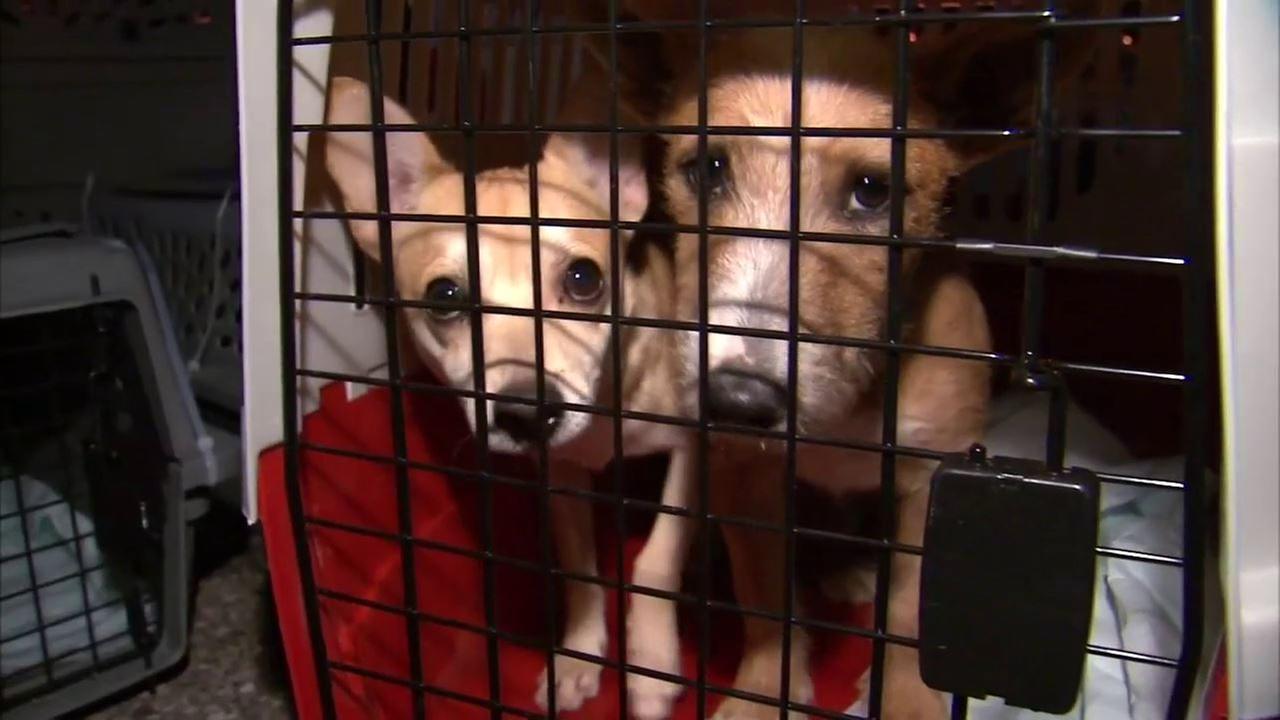 Dog Adoption Long Island Ny
