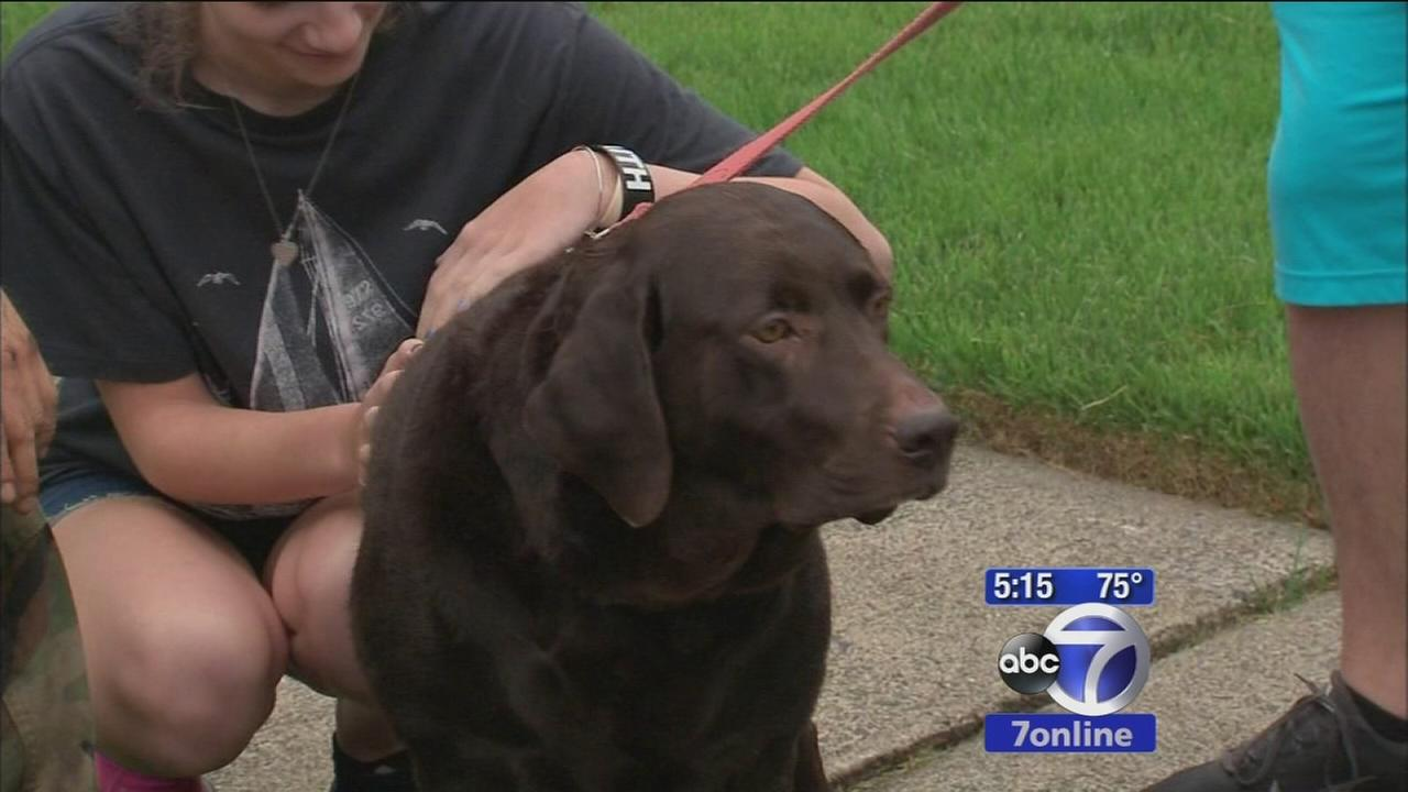 Mail stops coming after dog attack