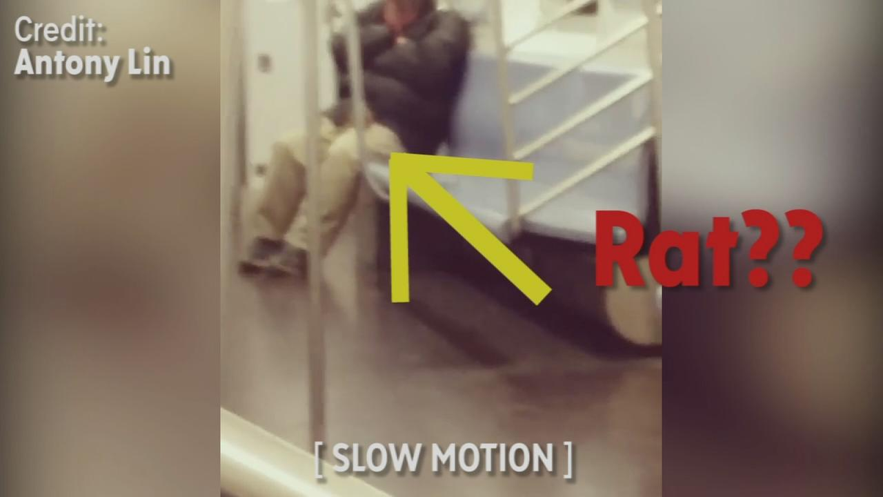 Video shows possible rat on 7 train