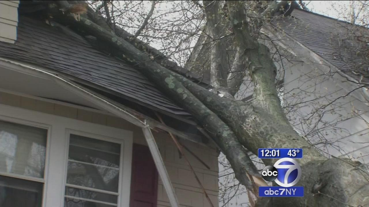 Tree falls on house in East Orange