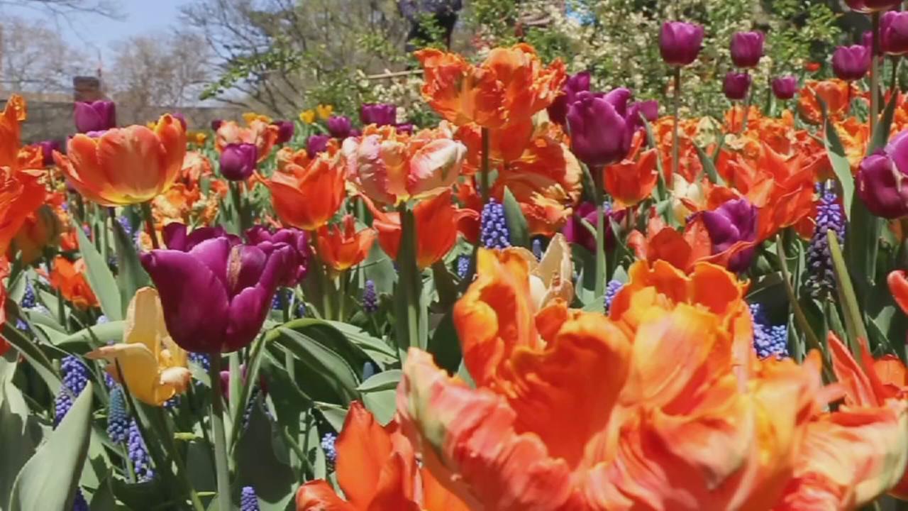 Central Parks Shakespeare Garden celebrates 100th anniversary