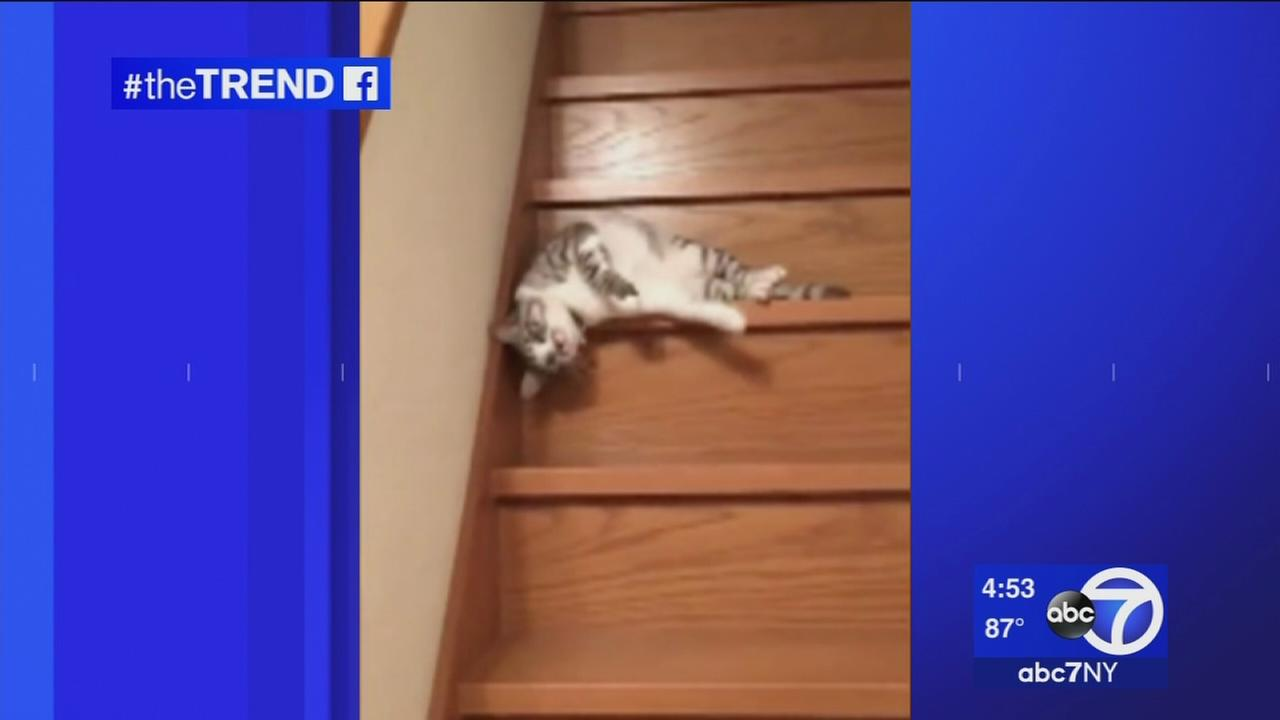 The Trend: Lazy cat has unique way of going down stairs