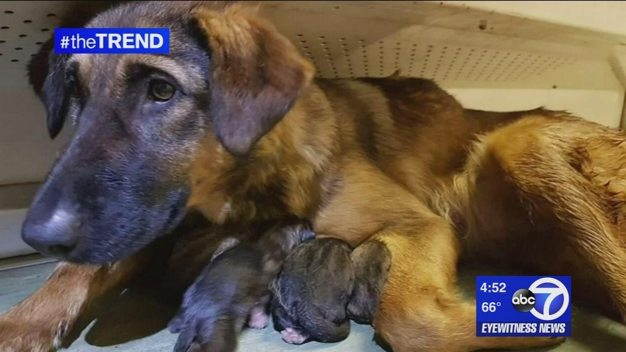 The Trend: Dog gives birth on Moscow subway