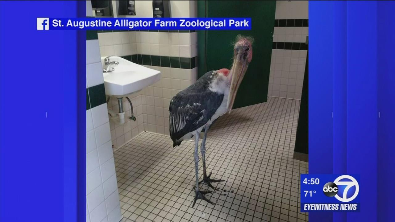 The Trend: Pelican seeks shelter from Hurricane Matthew