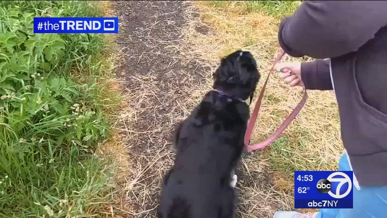 The Trend: Couple learns importance of leash the hard way