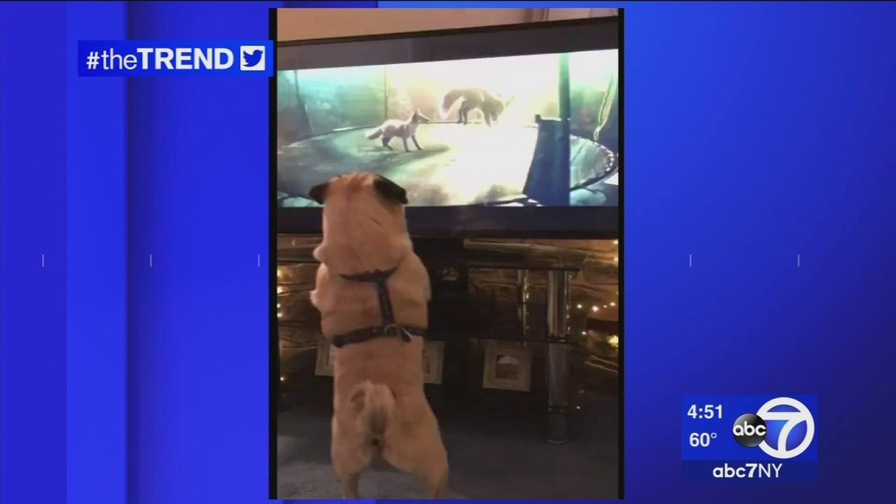 The Trend: Dogs jumping for joy over British holiday ad