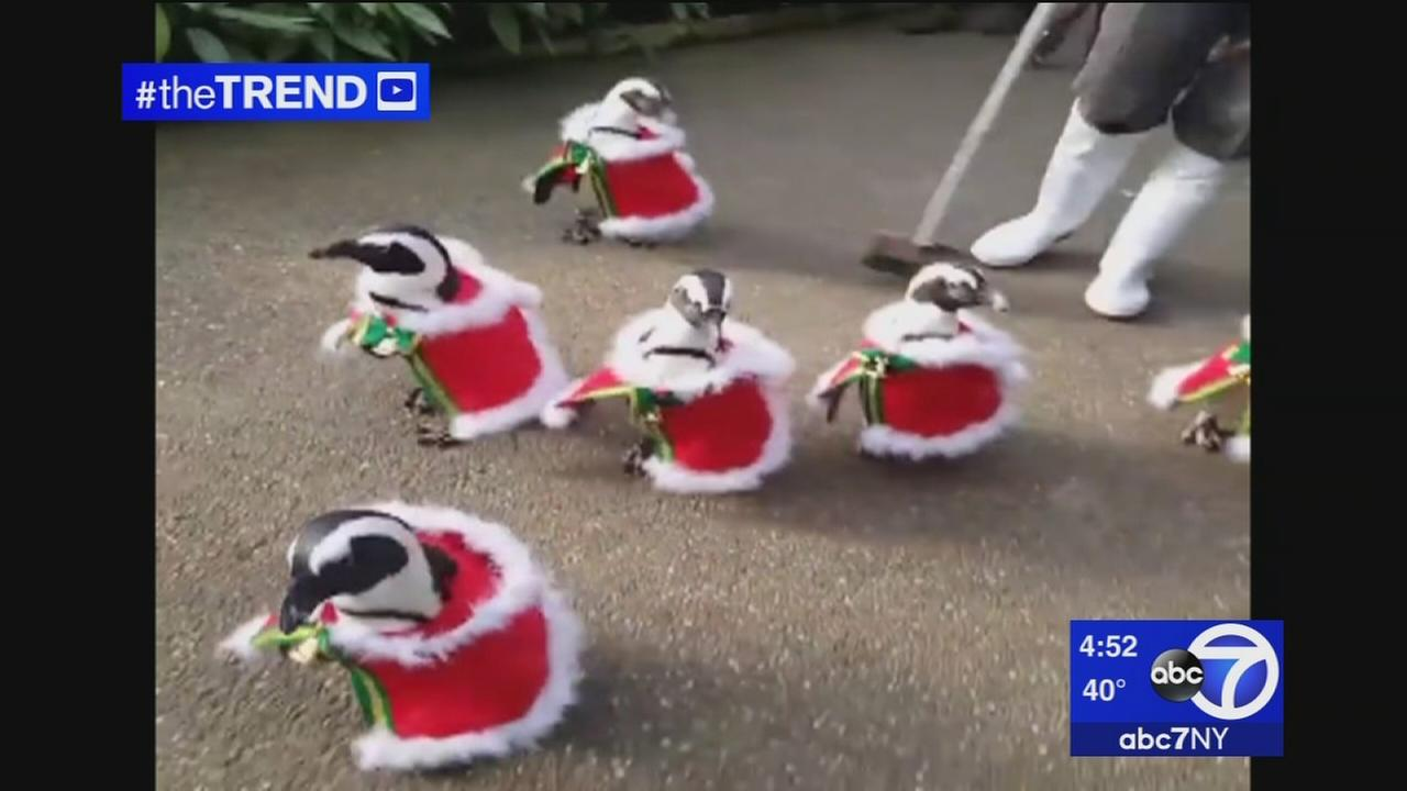 The Trend: It doesnt get any cuter than penguins dressed in Santa suits