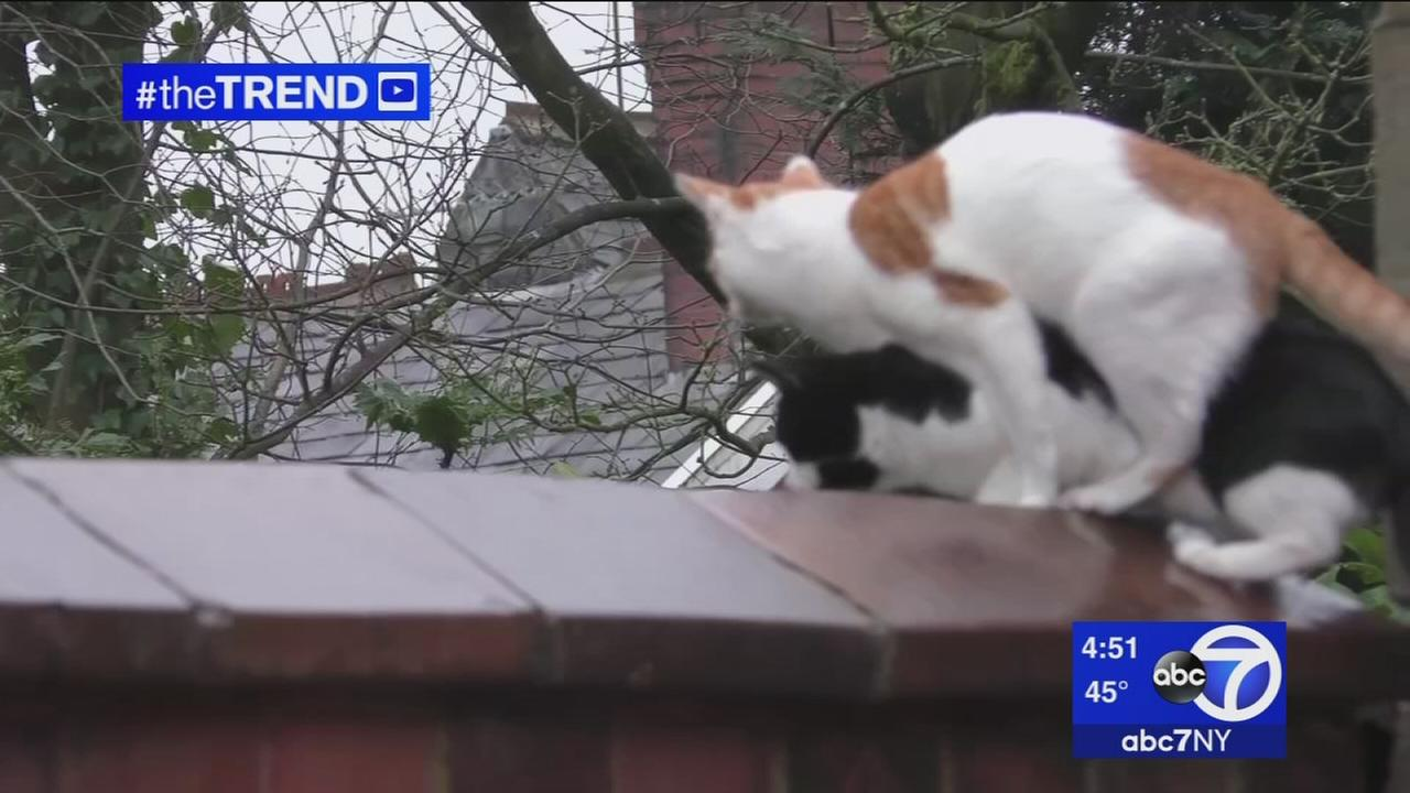 The Trend: When two cats think alike