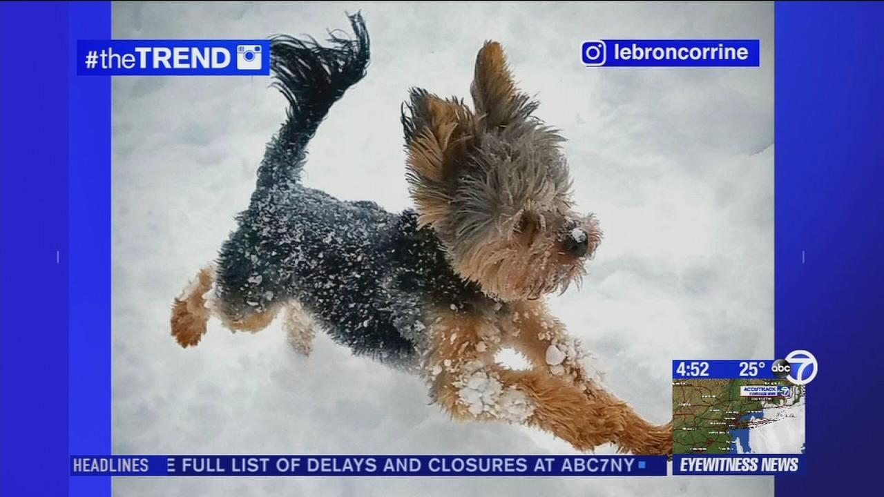 The Trend: Viewer snow photos