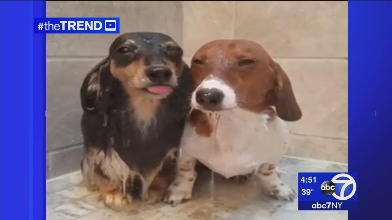 The Trend: Valentines Day is for dogs, too