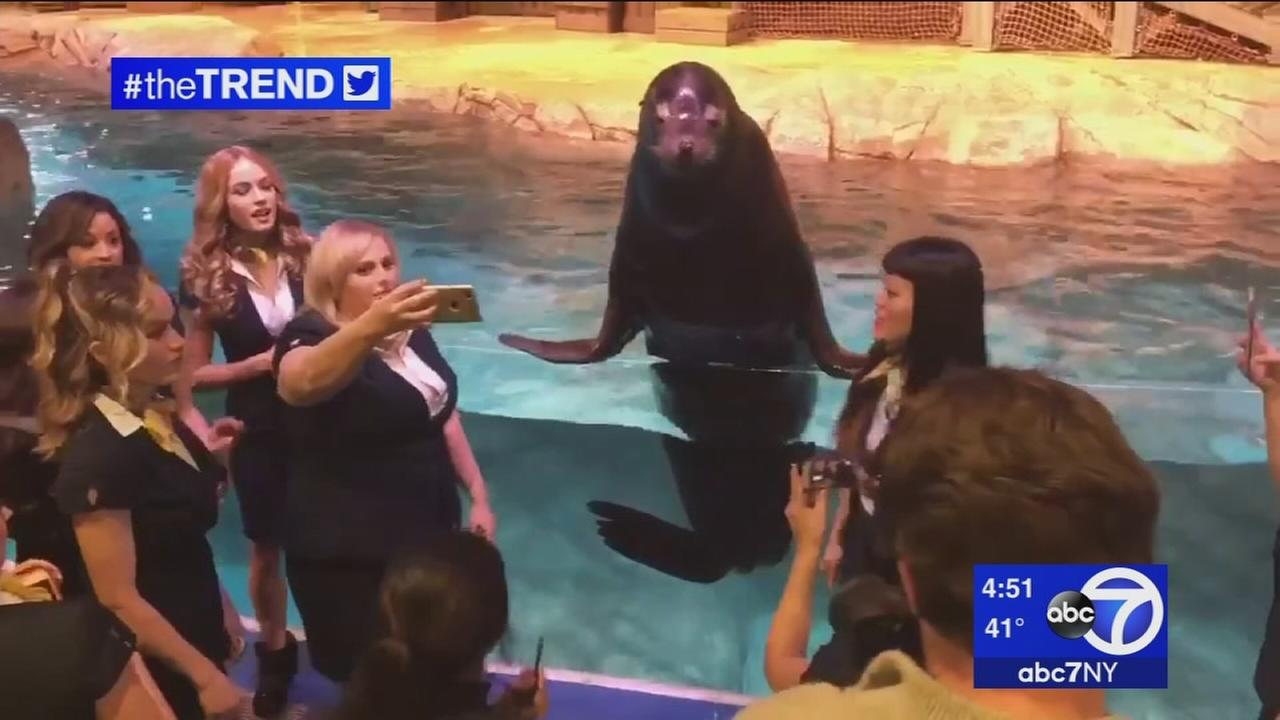 The Trend: Pitch Perfect cast harmonizes with sea lion
