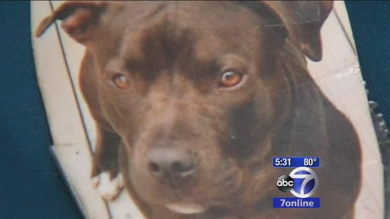 Dog shot during North Bellport home invasion